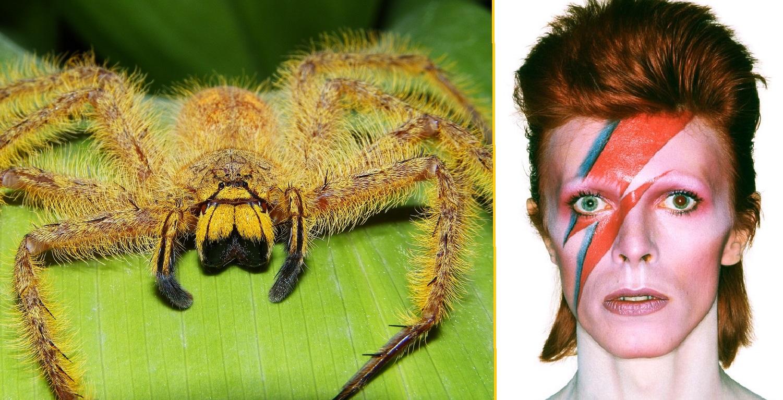 David Bowie è vivo… ma ha 8 zampe ed è velenoso!