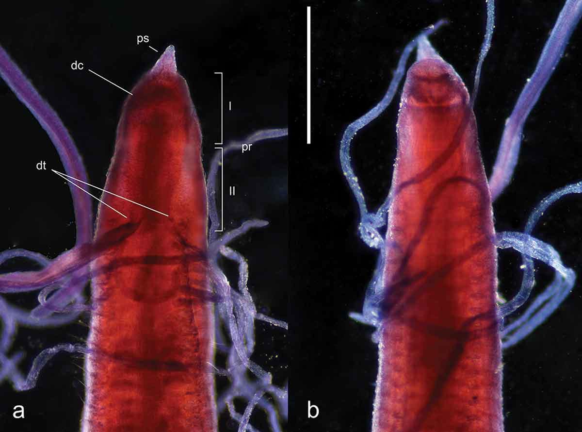 Alla scoperta di una nuova specie: intervista con il Tassonomo