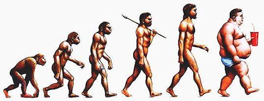 Il complesso percorso dell'alimentazione umana